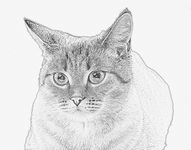 Cats Paws A2 Vellum Envelopes
